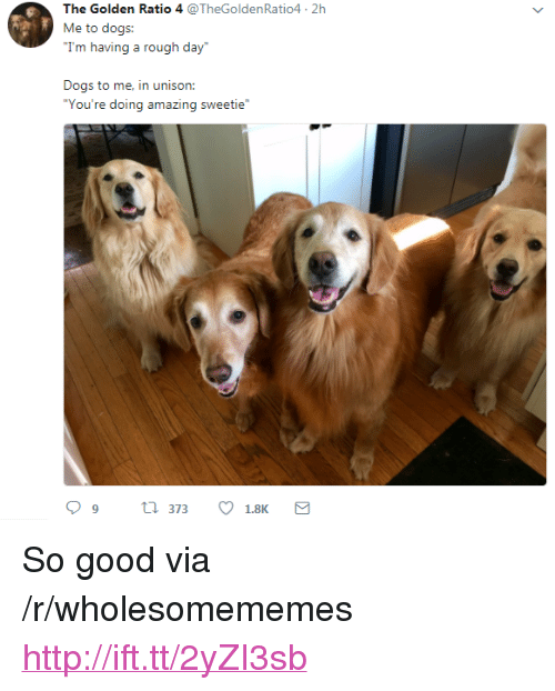 """Dogs, Good, and Http: The Golden Ratio 4 @TheGoldenRatio4 2h  Me to dogs:  Trm tviij a rugh diy  Dogs to me, in unison:  """"You're doing amazing sweetie <p>So good via /r/wholesomememes <a href=""""http://ift.tt/2yZI3sb"""">http://ift.tt/2yZI3sb</a></p>"""