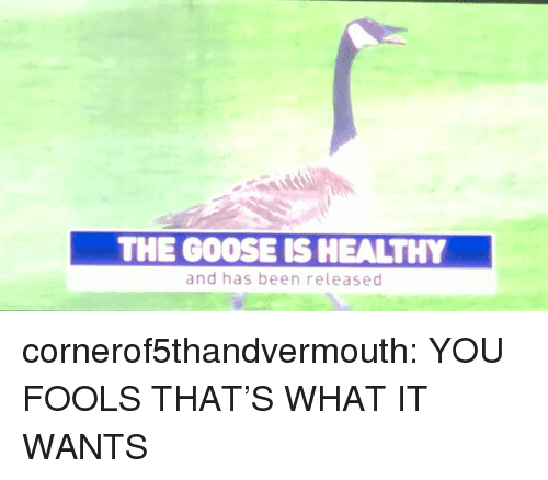 Tumblr, Blog, and Http: THE GOOSE IS HEALTHY  and has been released cornerof5thandvermouth: YOU FOOLS THAT'S WHAT IT WANTS