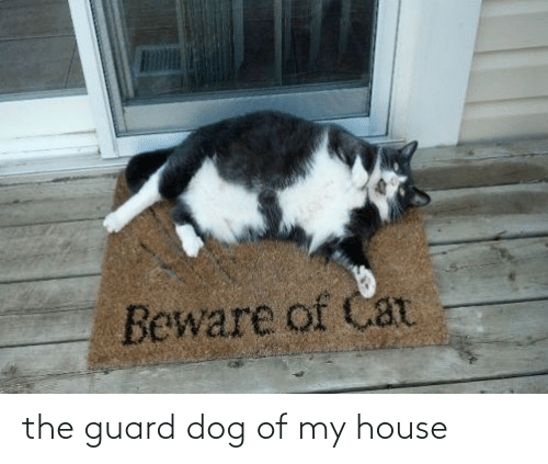 My House: the guard dog of my house