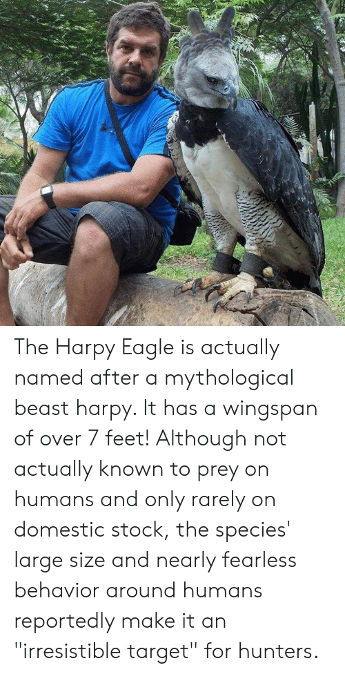 "Eagle: The Harpy Eagle is actually named after a mythological beast harpy. It has a wingspan of over 7 feet! Although not actually known to prey on humans and only rarely on domestic stock, the species' large size and nearly fearless behavior around humans reportedly make it an ""irresistible target"" for hunters."
