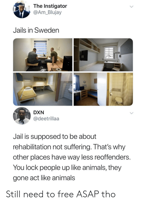Animals, Jail, and Free: The Instigator  @Am_Blujay  Jails in Sweden  DXN  @deetrillaa  Jail is supposed to be about  rehabilitation not suffering. That's why  other places have way less reoffenders.  You lock people up like animals, they  gone act like animals Still need to free ASAP tho
