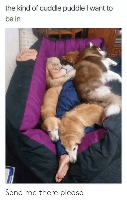 Dank, 🤖, and Cuddle: the kind of cuddle puddle I want to  be in Send me there please