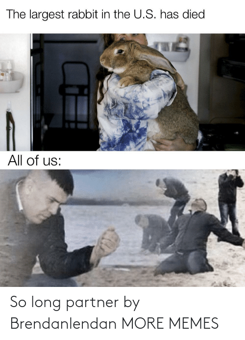 so long: The largest rabbit in the U.S. has died  All of us: So long partner by Brendanlendan MORE MEMES