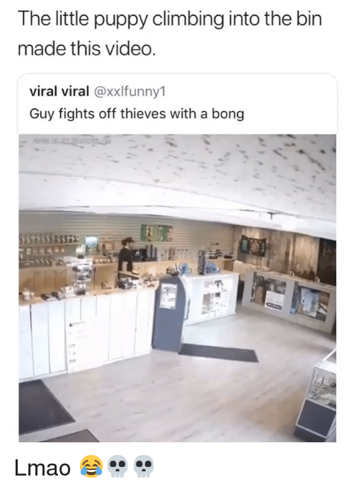 Climbing, Funny, and Lmao: The little puppy climbing into the bin  made this video.  viral viral @xxlfunny1  Guy fights off thieves with a bong Lmao 😂💀💀