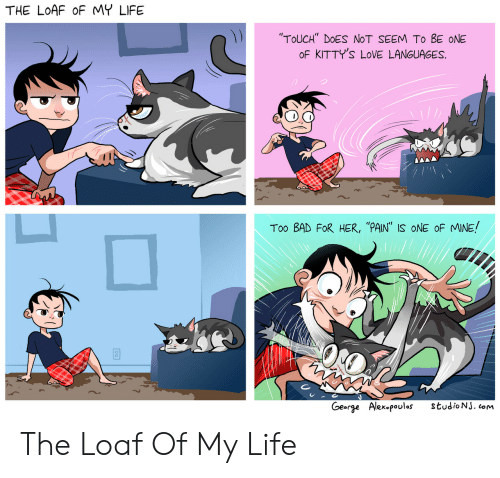 """Bad, Life, and Love: THE LOAF oF MY LIFE  """"TOUCH"""" DOES NOT SEEM To BE ONE  oF KITTY'S LOVE LANGUAGES.  Too BAD FoR HER, """"PAIN"""" IS ONE oF MINE  George  Alex叩oulos  studioNJ. com The Loaf Of My Life"""