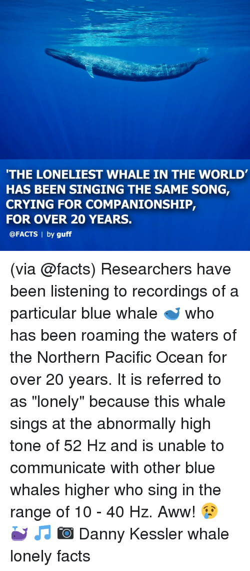 "Aww, Crying, and Facts: THE LONELIEST WHALE IN THE WORLD  HAS BEEN SINGING THE SAME SONG,  CRYING FOR COMPANIONSHIP,  FOR OVER 20 YEARS.  @FACTS | by guff (via @facts) Researchers have been listening to recordings of a particular blue whale 🐋 who has been roaming the waters of the Northern Pacific Ocean for over 20 years. It is referred to as ""lonely"" because this whale sings at the abnormally high tone of 52 Hz and is unable to communicate with other blue whales higher who sing in the range of 10 - 40 Hz. Aww! 😢 🐳 🎵 📷 Danny Kessler whale lonely facts"