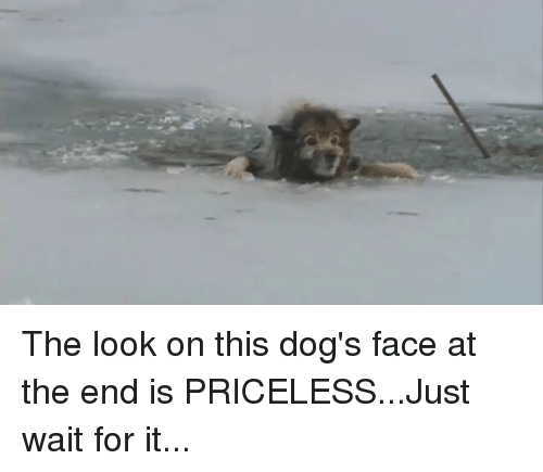 Dog Faces: The look on this dog's face at the end is PRICELESS...Just wait for it...