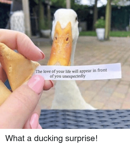 Dank, Life, and Love: The love of your life will appear in front  of you unexpectedly What a ducking surprise!