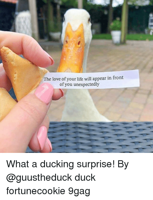 9gag, Life, and Love: The love of your life will appear in front  of you unexpectedly What a ducking surprise! By @guustheduck duck fortunecookie 9gag