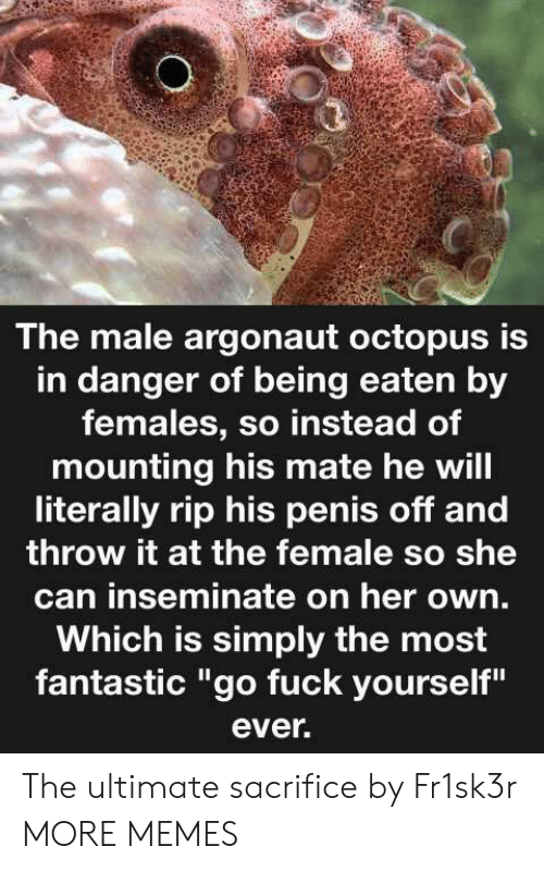 "Octopus: The male argonaut octopus is  in danger of being eaten by  females, so instead of  mounting his mate he will  literally rip his penis off and  throw it at the female so she  can inseminate on her own.  Which is simply the most  fantastic ""go fuck yourself""  ever. The ultimate sacrifice by Fr1sk3r MORE MEMES"
