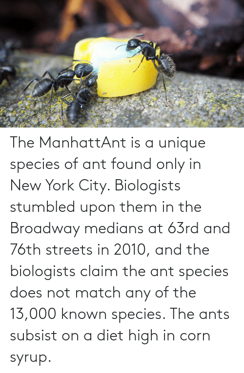 in-new-york-city: The ManhattAnt is a unique species of ant found only in New York City. Biologists stumbled upon them in the Broadway medians at 63rd and 76th streets in 2010, and the biologists claim the ant species does not match any of the 13,000 known species. The ants subsist on a diet high in corn syrup.