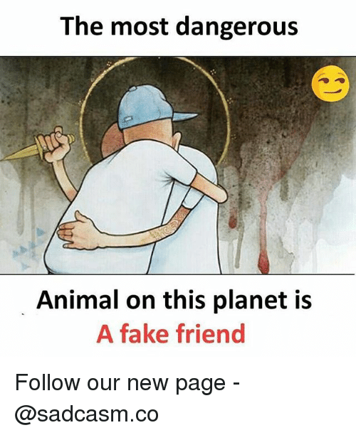 Fake, Memes, and Animal: The most dangerous  Animal on this planet is  A fake friend Follow our new page - @sadcasm.co