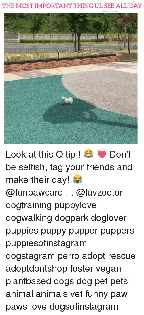 Animals, Dogs, and Friends: THE MOST IMPORTANT THING UL SEE ALL DAY  @funpawcare Look at this Q tip!! 😂 💓 Don't be selfish, tag your friends and make their day! 😂 @funpawcare . . @luvzootori dogtraining puppylove dogwalking dogpark doglover puppies puppy pupper puppers puppiesofinstagram dogstagram perro adopt rescue adoptdontshop foster vegan plantbased dogs dog pet pets animal animals vet funny paw paws love dogsofinstagram
