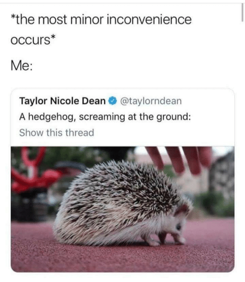 Dean: *the most minor inconvenience  occurs*  Me:  Taylor Nicole Dean O @taylorndean  A hedgehog, screaming at the ground:  Show this thread