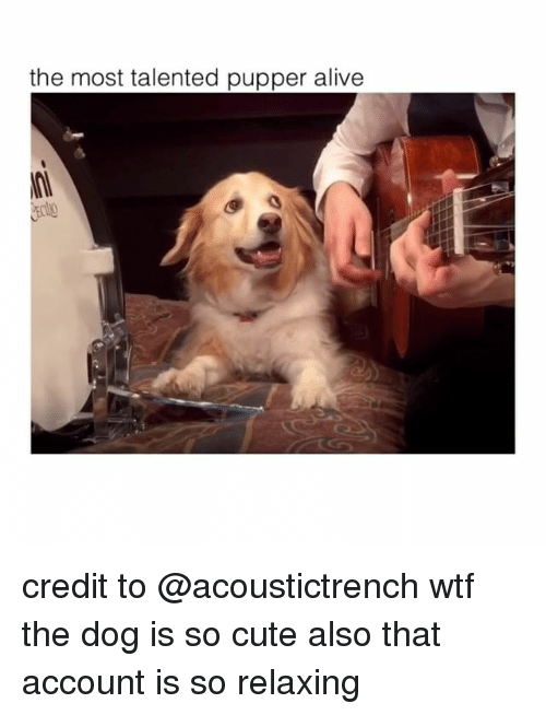 Alive, Cute, and Wtf: the most talented pupper alive credit to @acoustictrench wtf the dog is so cute also that account is so relaxing
