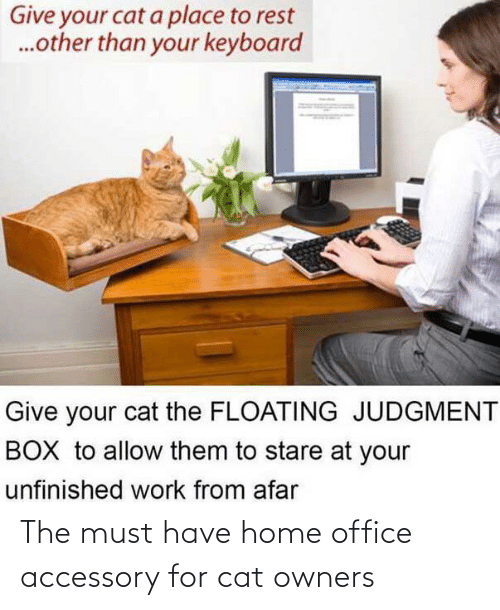 cat: The must have home office accessory for cat owners