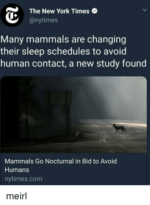 New York, New York Times, and Nytimes: The New York Times  @nytimes  Many mammals are changing  their sleep schedules to avoid  human contact, a new study found  Mammals Go Nocturnal in Bid to Avoid  Humans  nytimes.com meirl