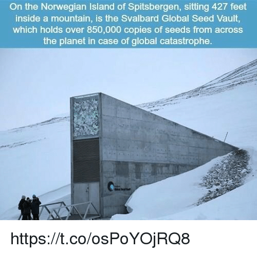 Norwegian, Feet, and Vault: the Norwegian Island of Spitsbergen, sitting 427 feet  the a mountain, is the Svalbard Global Seed Vault,  which holds over 850,000 copies of seeds from across  the planet in case of global catastrophe. https://t.co/osPoYOjRQ8