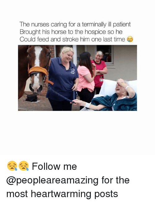Memes, Horse, and Patient: The nurses caring for a terminally ill patient  Brought his horse to the hospice so he  Could feed and stroke him one last time 😪😪 Follow me @peopleareamazing for the most heartwarming posts