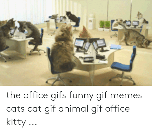 🦅 25+ Best Memes About Funny Gif Memes | Funny Gif Memes