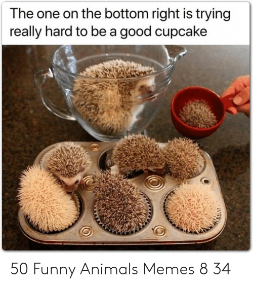 Animals, Funny, and Funny Animals: The one on the bottom right is trying  really hard to be a good cupcake 50 Funny Animals Memes 8 34
