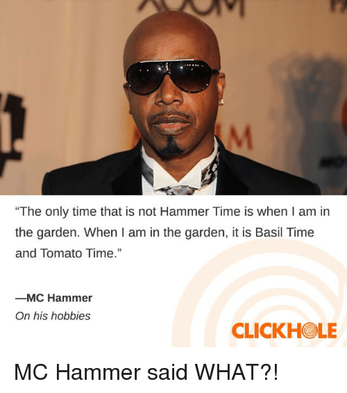 "Dank, MC Hammer, and Time: ""The only time that is not Hammer Time is when I am in  the garden. When I am in the garden, it is Basil Time  and Tomato Time.""  ーMC Hammer  On his hobbies  CLICKHOLE MC Hammer said WHAT?!"