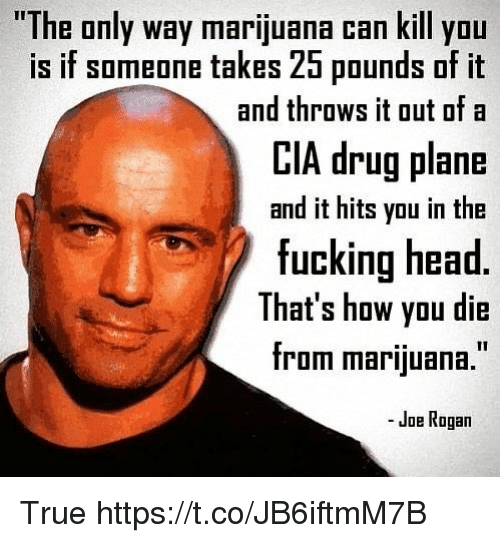 Fucking, Funny, and Head: The only way marijuana can kill yOu  is if someone takes 25 pounds of it  CIA drug plane  fucking head  and throws it out ofa  and it hits you in the  That's how you die  from marijuana.  - Joe Rogan True https://t.co/JB6iftmM7B