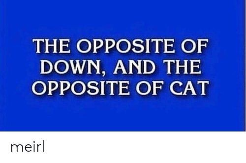 MeIRL, Cat, and Down: THE OPPOSITE OF  DOWN, AND THE  OPPOSITE OF CAT meirl