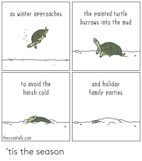 Turtle: the painted turtle  burrows into the mud  as winter approaches  to avoid the  harsh cold  and holiday  family parties  theycantalk.com 'tis the season