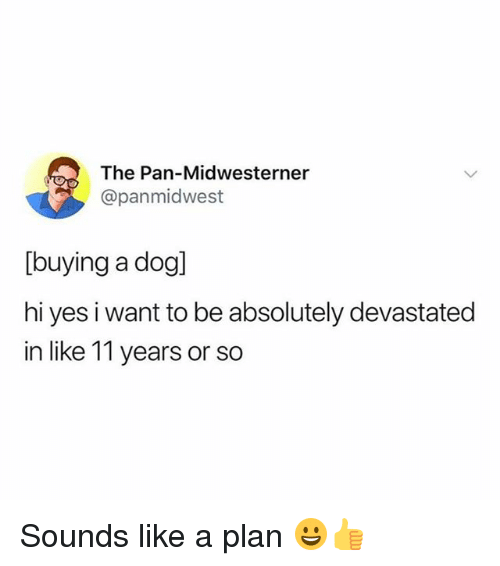 Funny, Girl Memes, and Pan: The Pan-Midwesterner  @panmidwest  [buying a dog]  hi yes i want to be absolutely devastated  in like 11 years or so Sounds like a plan 😀👍
