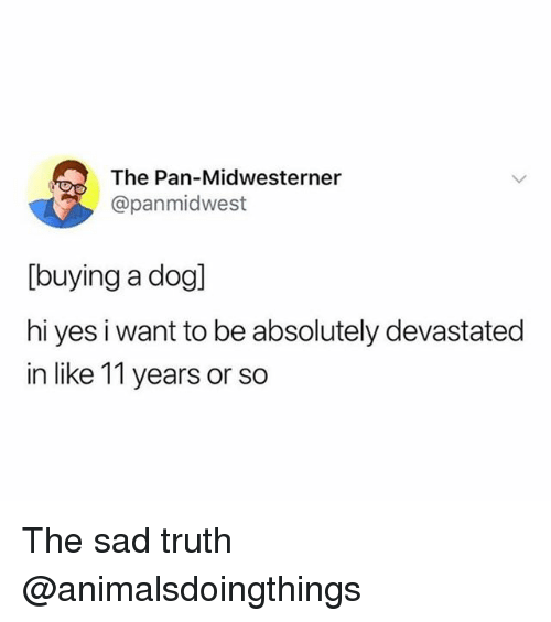 Dank Memes, Sad, and Truth: The Pan-Midwesterner  @panmidwest  [buying a dog]  hi yes i want to be absolutely devastated  in like 11 years or so The sad truth @animalsdoingthings