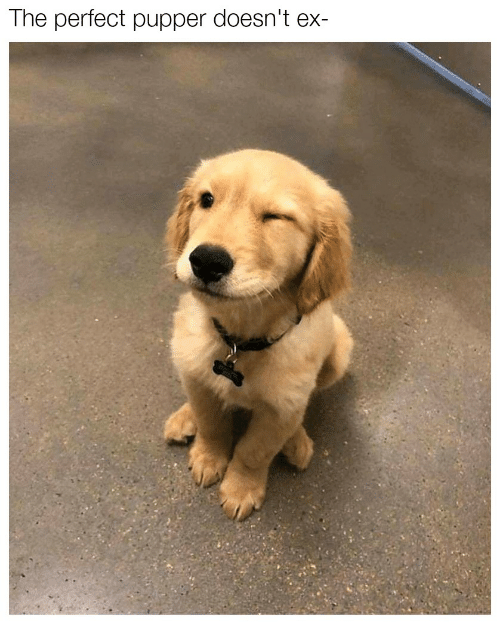 Perfect, Pupper, and The: The perfect pupper doesn't ex-