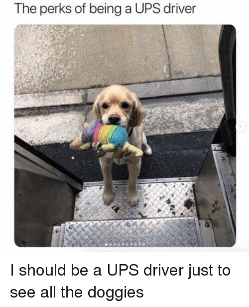 Ups, All The, and Driver: The perks of being a UPS driver I should be a UPS driver just to see all the doggies