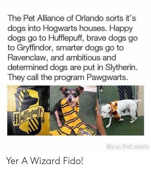 Dogs, Gryffindor, and Slytherin: The Pet Alliance of Orlando sorts it's  dogs into Hogwarts houses. Happy  dogs go to Hufflepuff, brave dogs go  to Gryffindor, smarter dogs go to  Ravenclaw, and ambitious and  determined dogs are put in Slytherin  They call the program Pawgwarts.  flefferuyy  AUУ  @yup.that.exists Yer A Wizard Fido!