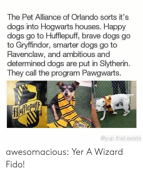 Slytherin: The Pet Alliance of Orlando sorts it's  dogs into Hogwarts houses. Happy  dogs go to Hufflepuff, brave dogs go  to Gryffindor, smarter dogs go to  Ravenclaw, and ambitious and  determined dogs are put in Slytherin  They call the program Pawgwarts.  flefferuyy  AUУ  @yup.that.exists awesomacious:  Yer A Wizard Fido!
