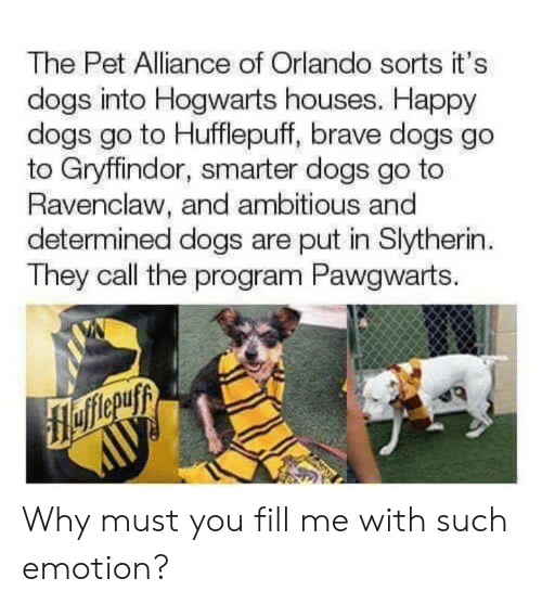 Dogs, Gryffindor, and Memes: The Pet Alliance of Orlando sorts it's  dogs into Hogwarts houses. Happy  dogs go to Hufflepuff, brave dogs go  to Gryffindor, smarter dogs go to  Ravenclaw, and ambitious and  determined dogs are put in Slytherin  They call the program Pawgwarts. Why must you fill me with such emotion?
