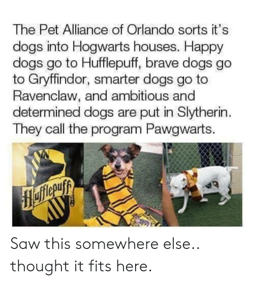 Slytherin: The Pet Alliance of Orlando sorts it's  dogs into Hogwarts houses. Happy  dogs go to Hufflepuff, brave dogs go  to Gryffindor, smarter dogs go to  Ravenclaw, and ambitious and  determined dogs are put in Slytherin  They call the program Pawgwarts. Saw this somewhere else.. thought it fits here.