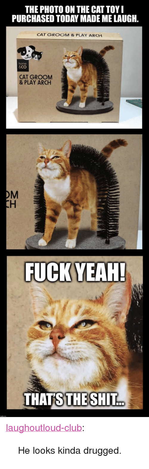 """drugged: THE PHOTO ON THE CAT TOY  PURCHASED TODAY MADE ME LAUGH  CAT GROOM & PLAY ARCH  home  &Co  CAT GROOM  & PLAY ARCH  OM  THATS  THE SHIT. <p><a href=""""http://laughoutloud-club.tumblr.com/post/169556883628/he-looks-kinda-drugged"""" class=""""tumblr_blog"""">laughoutloud-club</a>:</p>  <blockquote><p>He looks kinda drugged.</p></blockquote>"""