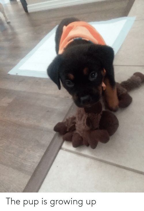 Growing up: The pup is growing up