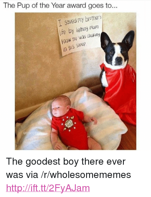 """Life, Http, and Sleep: The Pup of the Year award goes to...  I saved my brothers  life by leting mom  Ynow the was choking  is Sleep <p>The goodest boy there ever was via /r/wholesomememes <a href=""""http://ift.tt/2FyAJam"""">http://ift.tt/2FyAJam</a></p>"""
