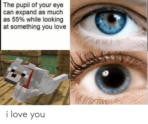 Love, I Love You, and Dank Memes: The pupil of your eye  can expand as much  as 55% while looking  at something you love i love you
