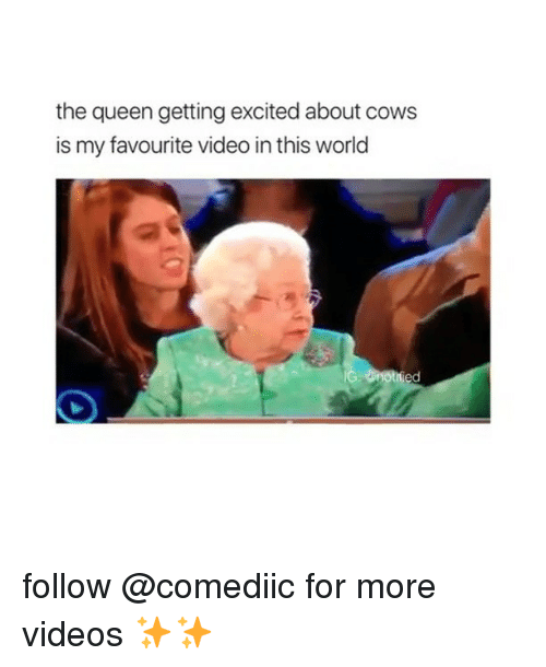 Memes, Videos, and Queen: the queen getting excited about cows  is my favourite video in this world follow @comediic for more videos ✨✨