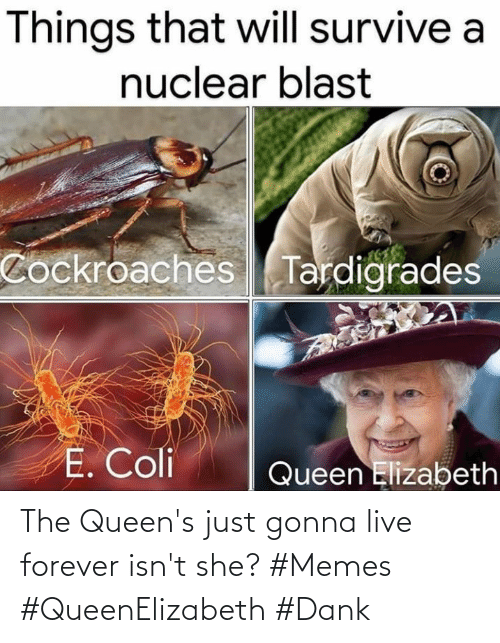 Isnt: The Queen's just gonna live forever isn't she? #Memes #QueenElizabeth #Dank