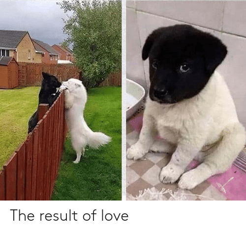 Result: The result of love