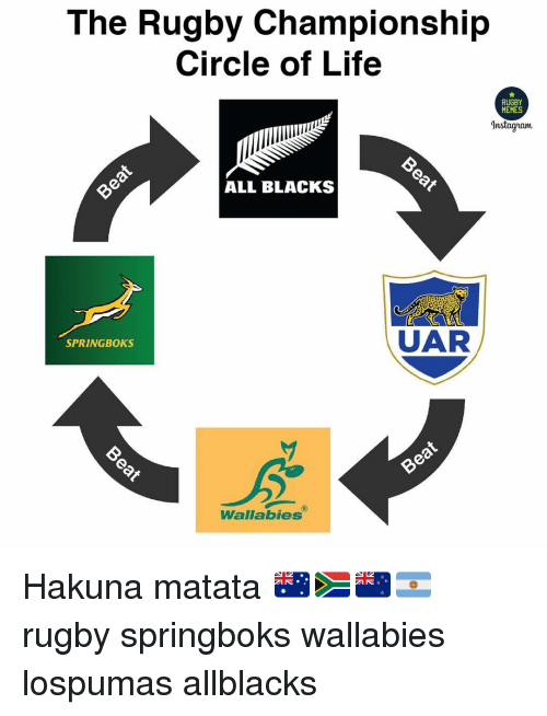 Life, Memes, and Rugby: The Rugby Championship  Circle of Life  RUGBY  MEMES  nstagram  ALL BLACKS  UAR  SPRINGBOKS  Wallabies Hakuna matata 🇦🇺🇿🇦🇳🇿🇦🇷 rugby springboks wallabies lospumas allblacks