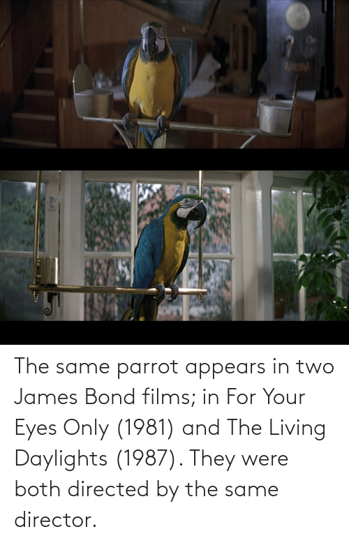 bond: The same parrot appears in two James Bond films; in For Your Eyes Only (1981) and The Living Daylights (1987). They were both directed by the same director.