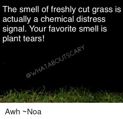 Memes, Smell, and 🤖: The smell of freshly cut grass is  actually a chemical distress  signal. Your favorite smell is  plant tears!  OWHATABOUTSCARY Awh ~Noa