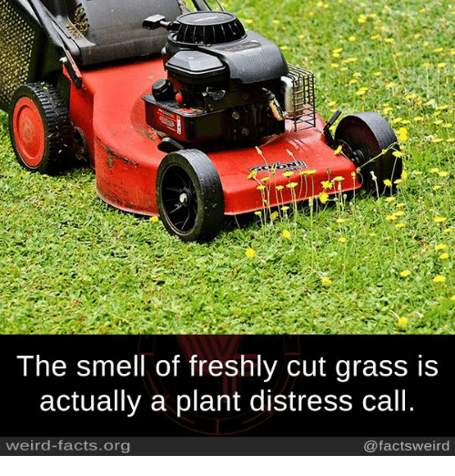 Facts, Memes, and Smell: The smell of freshly cut grass is  actually a plant distress call.  weird-facts.org  @facts weird