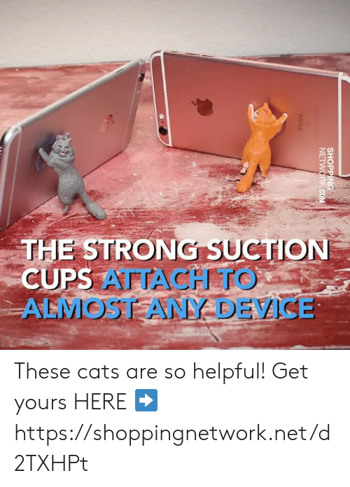 Cats, Dank, and Strong: THE STRONG SUCTION  CUPS  ALMOSTANY DEVICE These cats are so helpful! Get yours HERE ➡️ https://shoppingnetwork.net/d2TXHPt