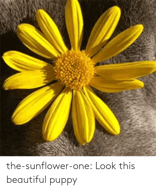 Puppy: the-sunflower-one: Look this beautiful puppy